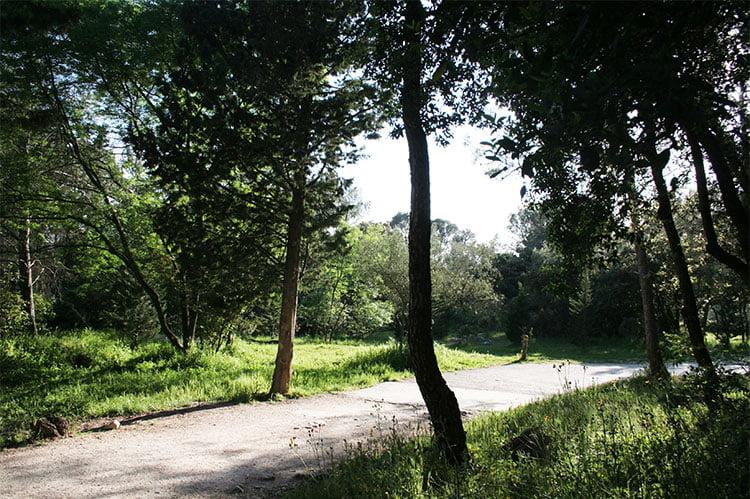 Bois De Montmaur
