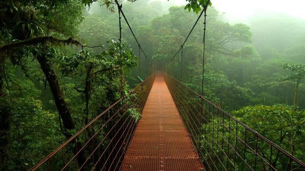 Foret Nuages Monteverde