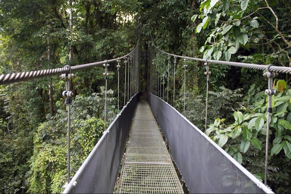 Randonnée Dans La Canopéé Au Costa Rica