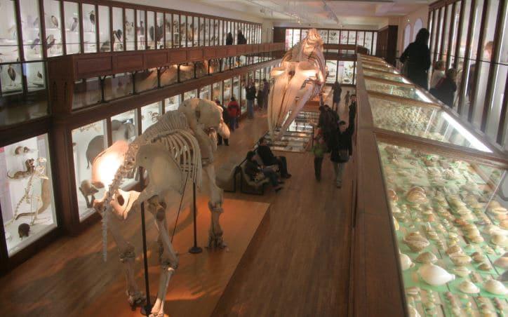 Musée D'histoire Nantes