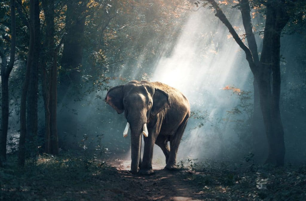 Elephant Inde