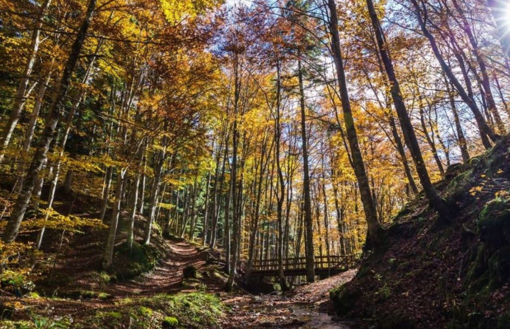 Parc National Des Forêts