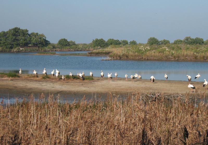 Ornithologie Teich