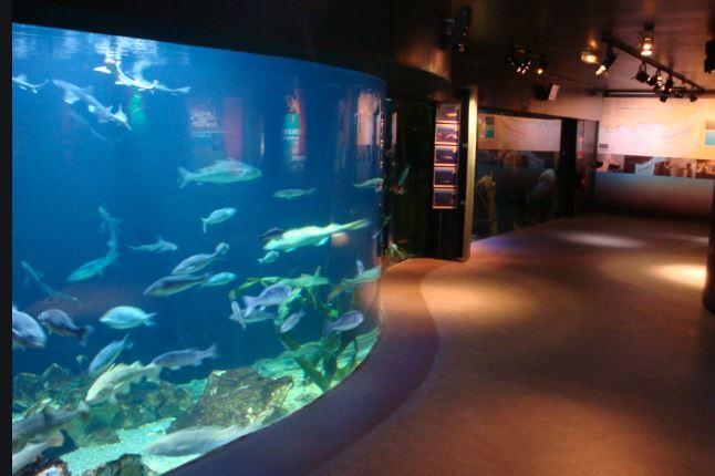 Musée Aquarium,