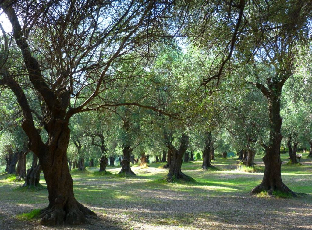 Menton Parc Du Pian