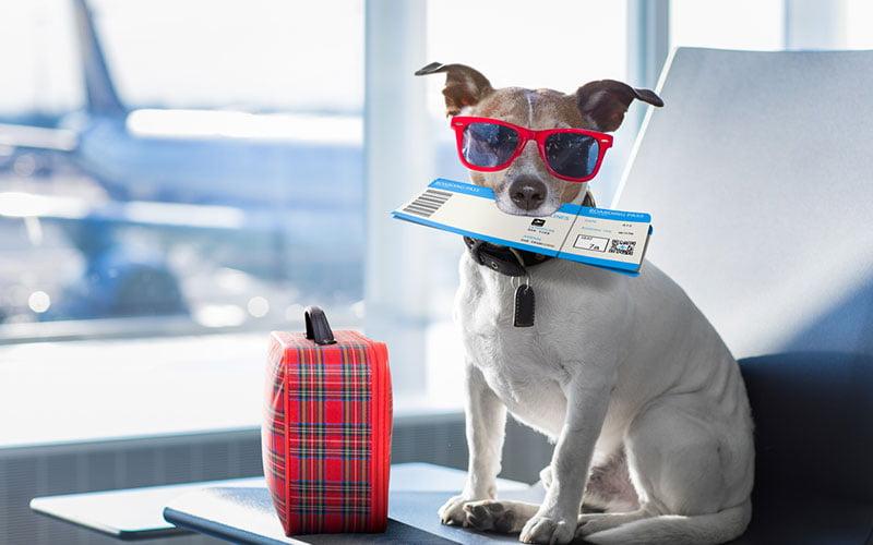 voyager en avion avec son animal de compagnie
