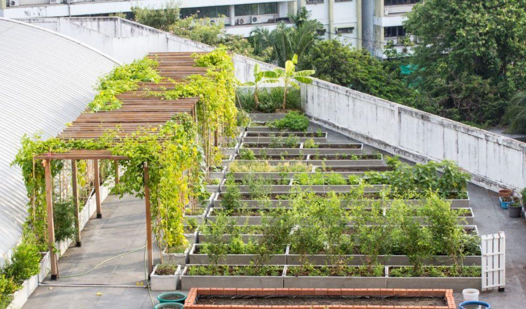 Jardin Suspendu Toit Végétal
